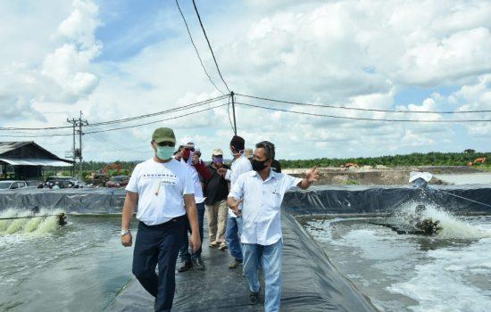 Bank Indonesia Sebut Pertumbuhan Ekonomi Babel Mulai Membaik